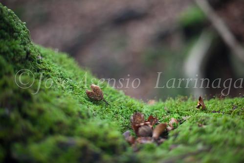 Parque Natural de #Gorbeia #DePaseoConLarri #Flickr      -1481
