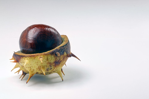 A conker | by Ervins Strauhmanis