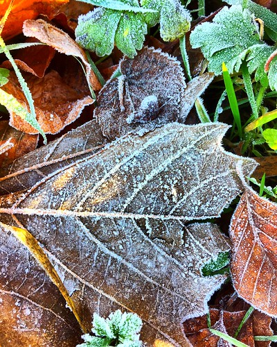 Morning frost | by sharonjanssens