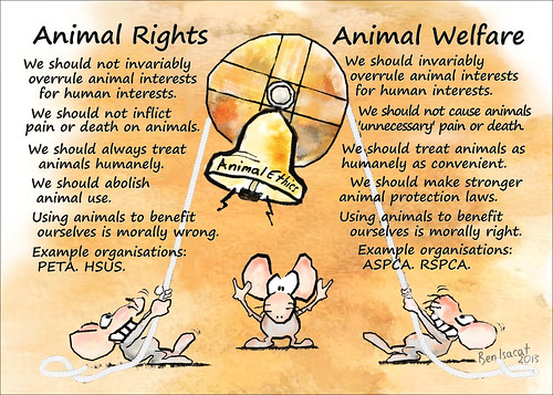 animal rights vs human rights essay Peter singer: on racism, animal rights and human rights by george   historically, we have often been compared to nonhuman animals.