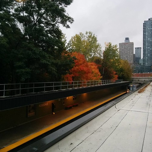 South through the window #toronto #rosedale #ttc #fall #autumn #leaves