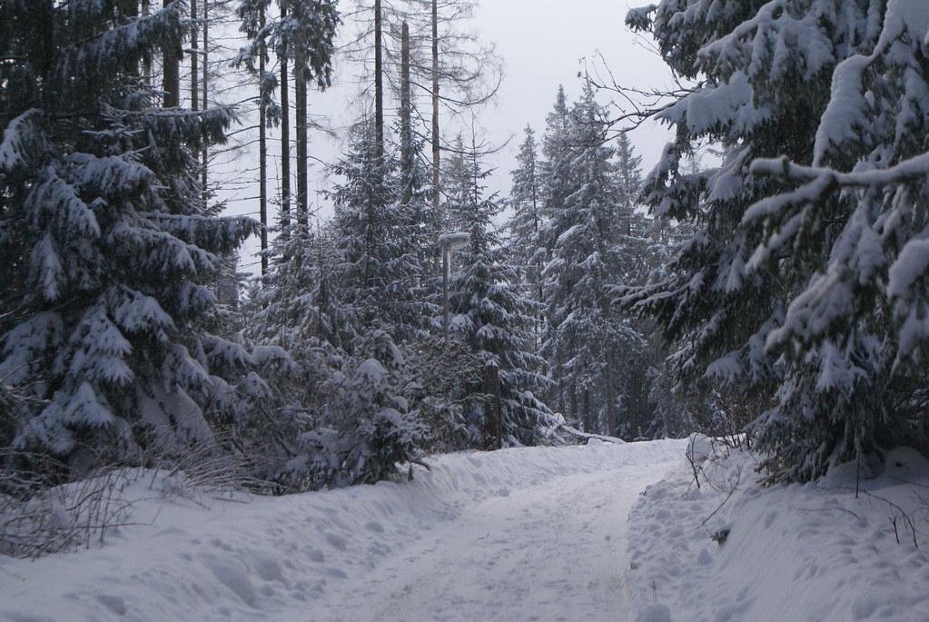 Dans la forêt sous la neige près de Zakopane.