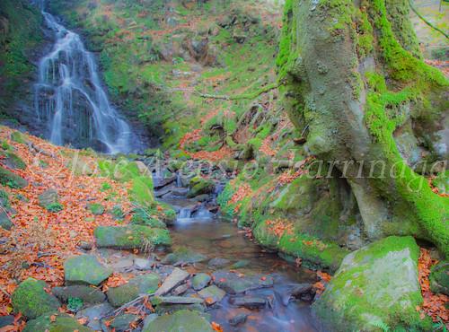 Parque natural de Gorbeia #DePaseoConLarri #Flickr      -2055
