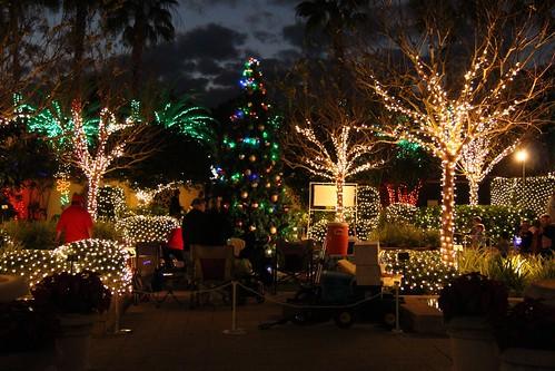Holiday lights florida botanical gardens in largo fl - Largo botanical gardens christmas lights ...