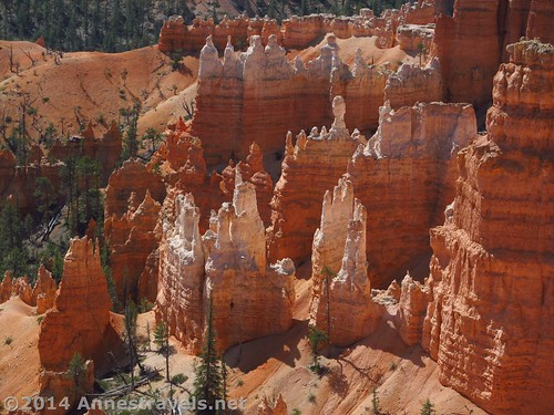 Hoodoos from the Queen's Garden Trail, Bryce Canyon National Park, Utah