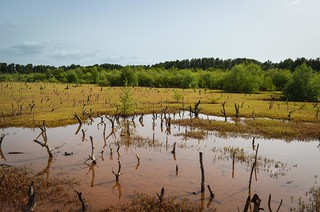 Swamp in Guinea-Bissau | by jbdodane