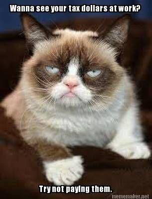 10640288506_ef8aec89e0 grumpy cat pays taxes www slapcaption com grumpy cat pays flickr