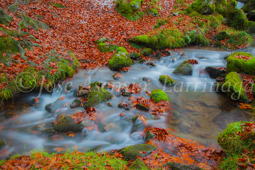 Parque Natural de #Gorbeia #DePaseoConLarri #Flickr      -1944