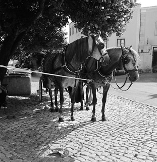 carriage horses | by astroturtle