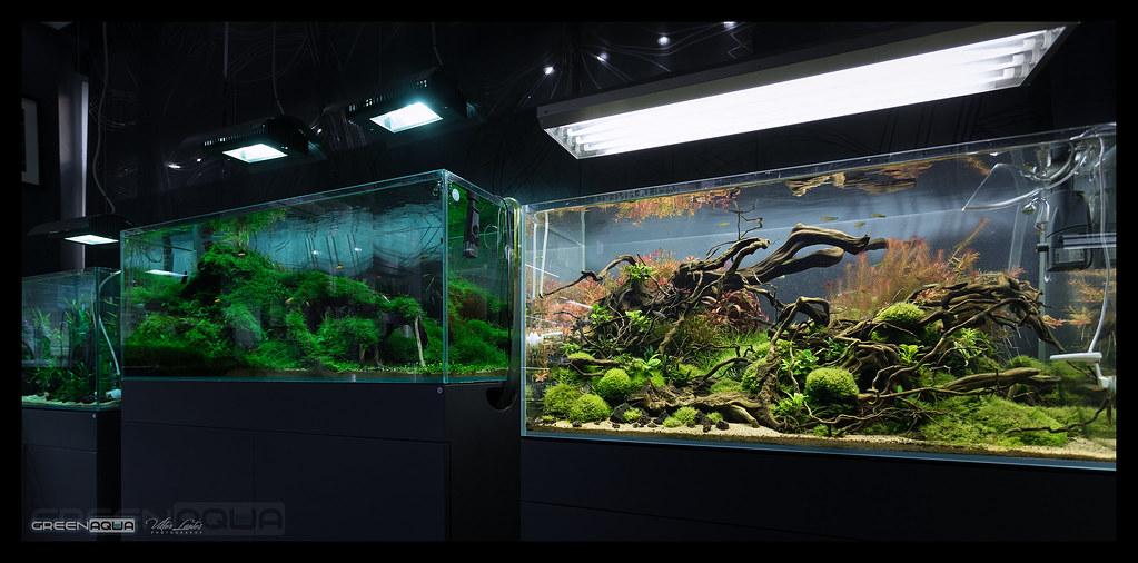 green aqua showroom current photos on our display aquarium flickr