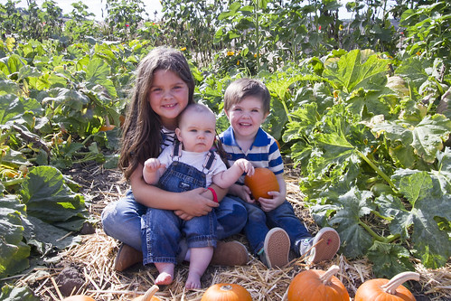 three little pumpkins | by The Spohrs Are Multiplying...