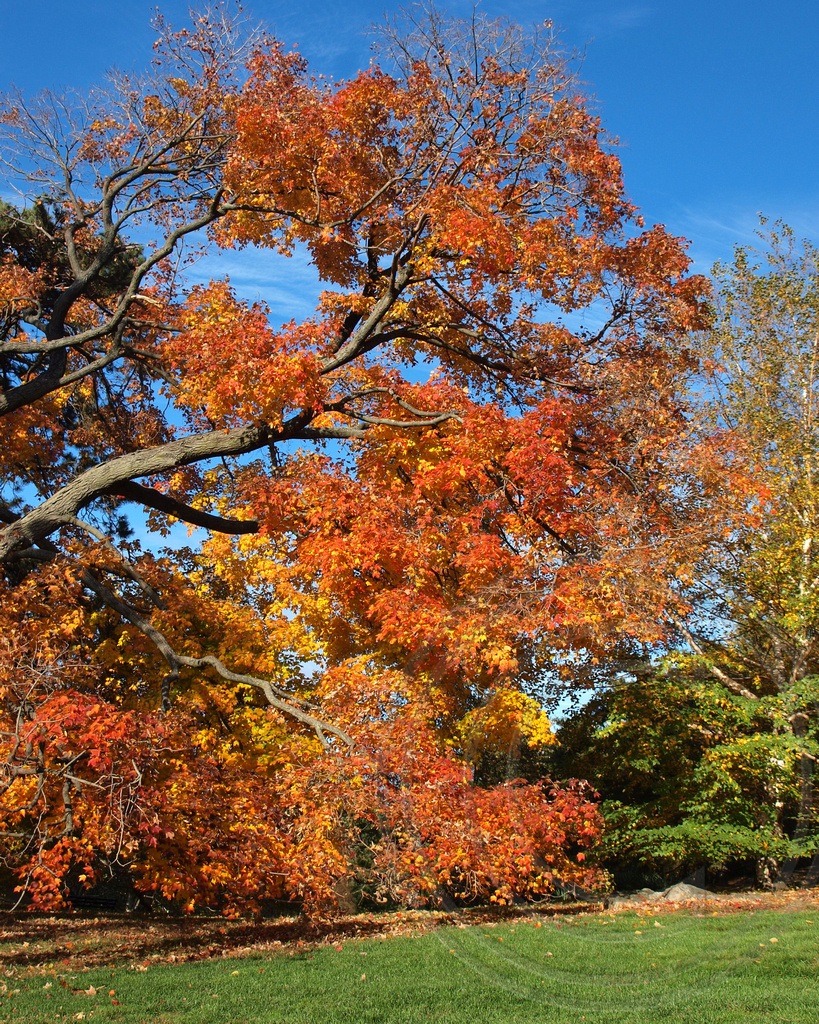2013 Fall Foliage at the New York Botanical Garden, Bronx,… | Flickr