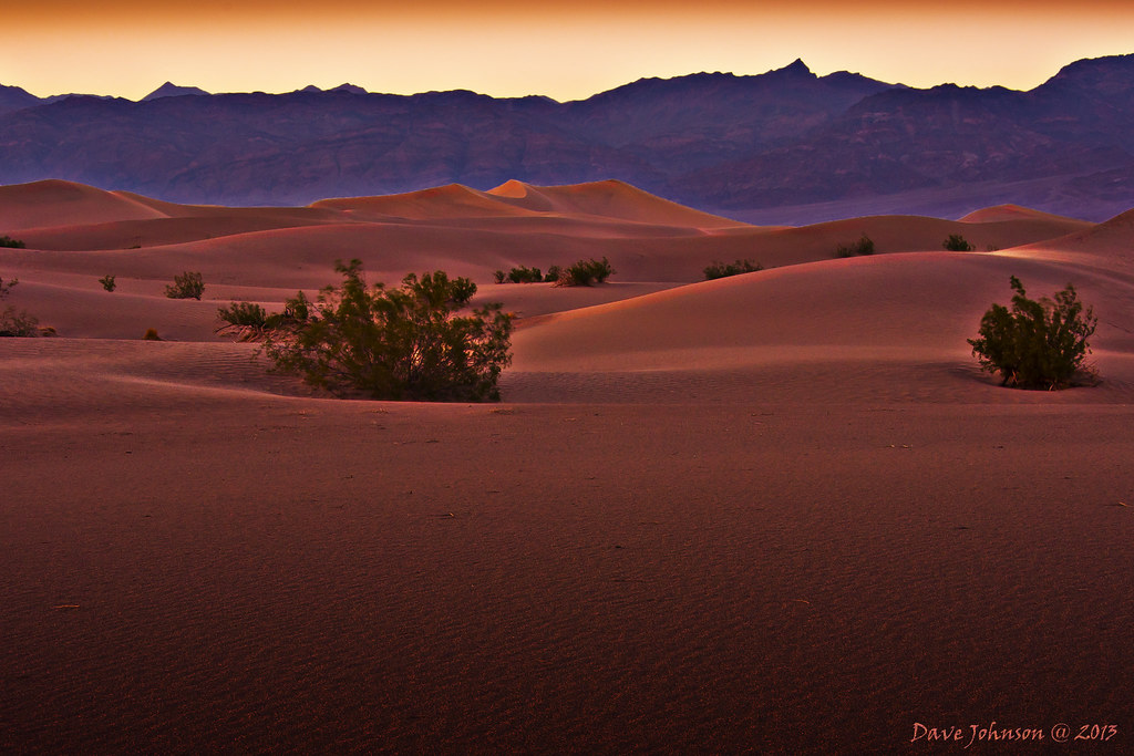 The Most Dry, Most Low And The Hottest Place, Death Valley, Is Full Of Life