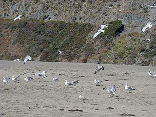081 Goat Rock State Beach