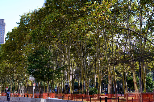 Cadman Plaza Park, August 2014 | by molybdena