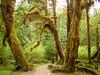 028 Hoh Rain Forest