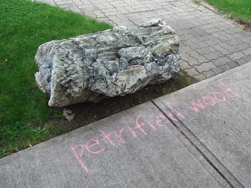 Kensington Chalk Bandit: Petrified Wood | by pageofbats