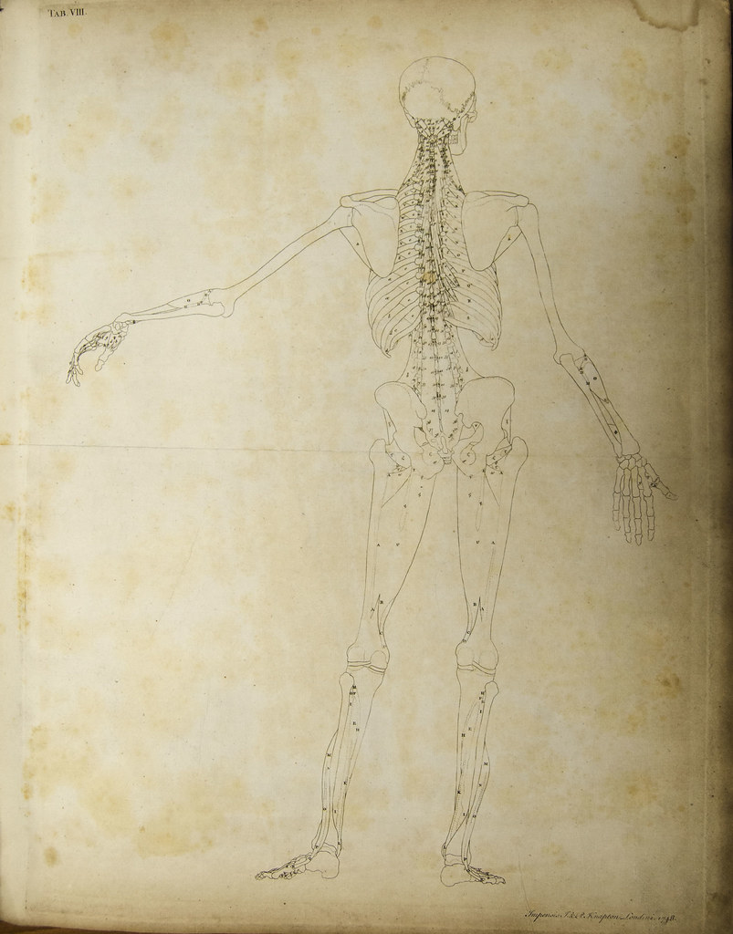 Anatomical diagram of the human skeleton (rear view) | Flickr