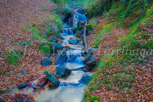 Parque Natural de Gorbeia #DePaseoConLarri #Flickr      -2830