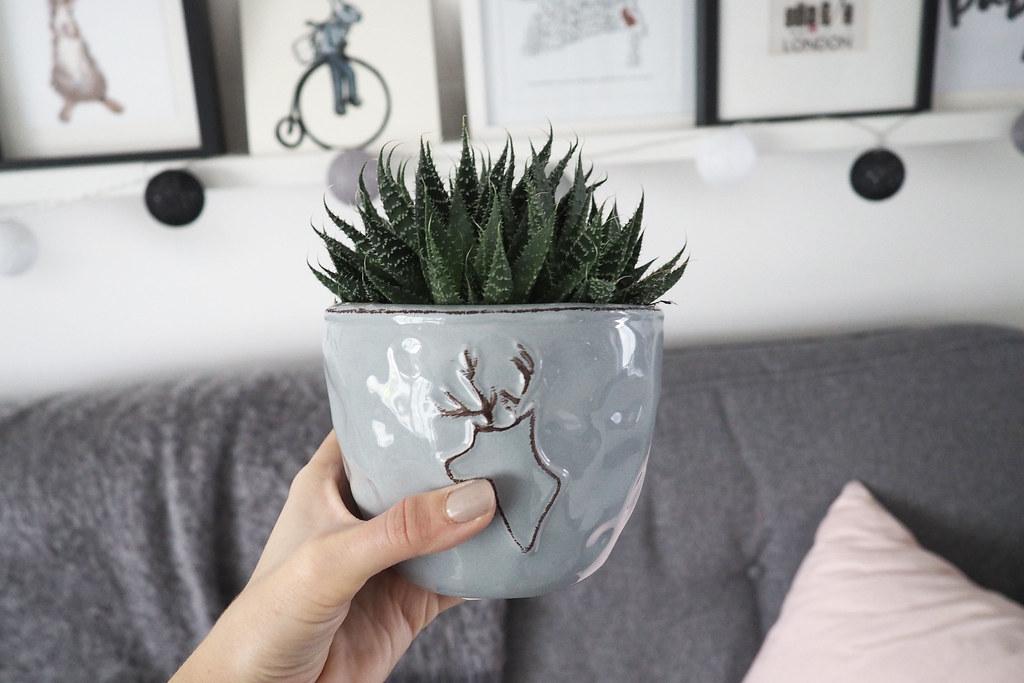 tesco succulent