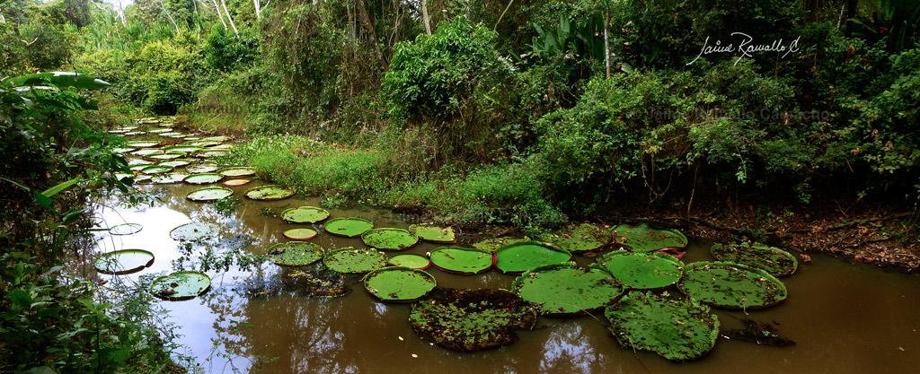 Amazon a boliviana flickr for Jungle furniture white river