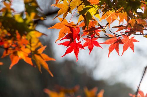 紅葉狩り - 東山公園 12
