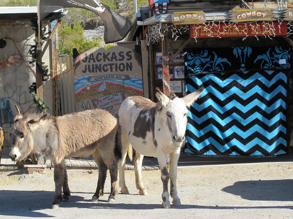 The wild donkeys of Oatman!