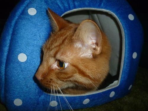 Favourite Cat photos