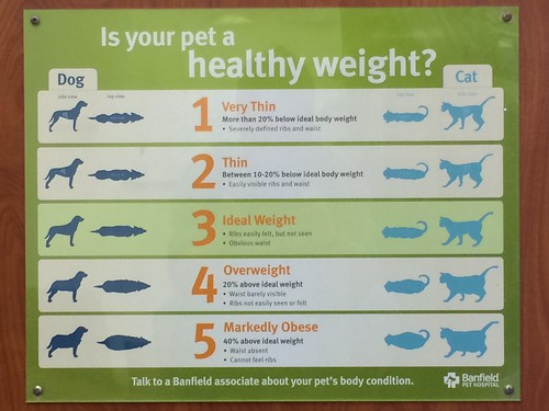 Is your pet a healthy weight? | by djuggler