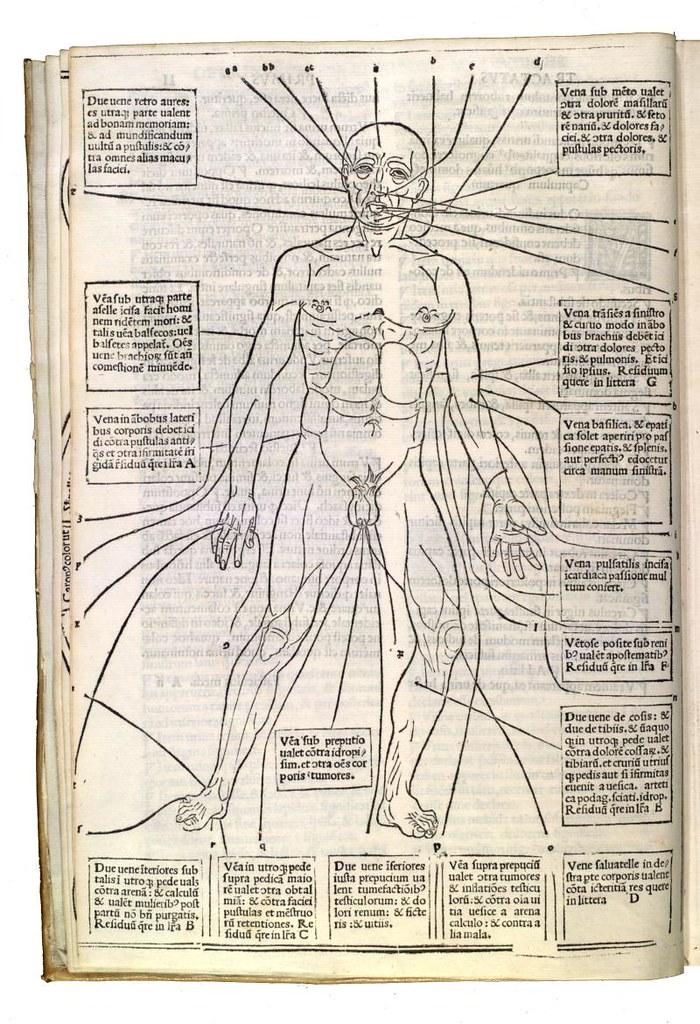 Surface anatomy, veins (Fasciculus medicinæ) | Descriptive T… | Flickr
