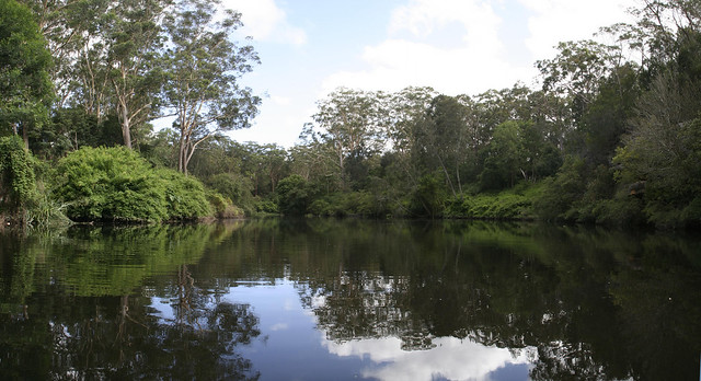 Lane Cove National Park Sydney Panorama