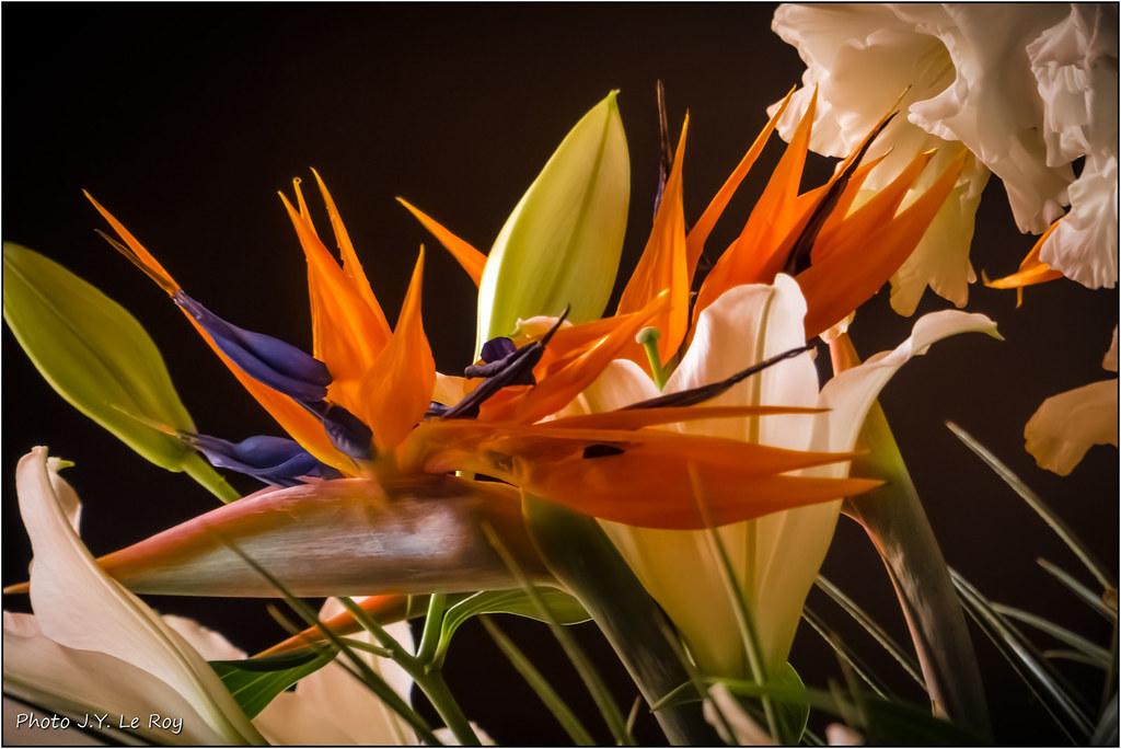 Fleur Oiseau De Paradis Bird Of Paradise Jyleroy Flickr