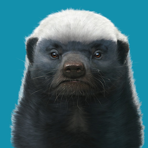 honey_badger_by_wallace-d5f92gh | by DJANDYW.COM