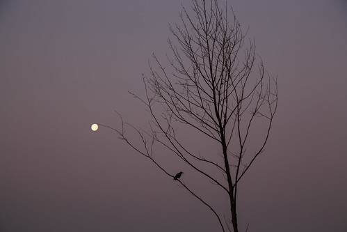 The Crow and the Moon | by aksoykaan1