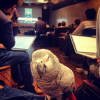 Frankie enjoying #hackday presentations. #knewton | by knewton_inc