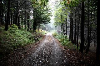 Foreste Casentinesi