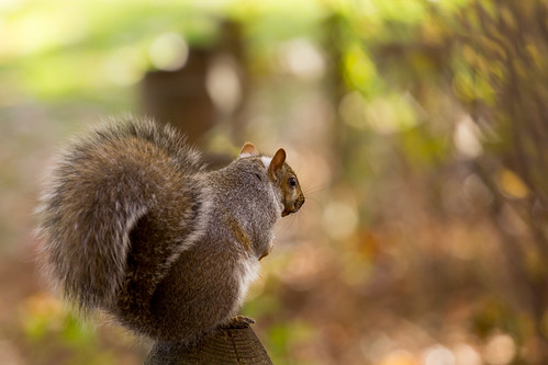 searching for nuts | by ocarmona