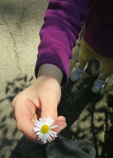 Look, a daisy! | by Ruth and Dave