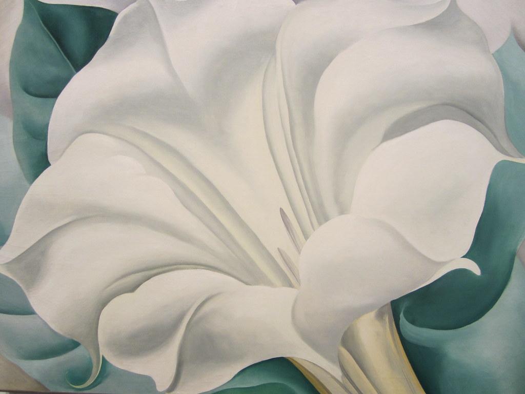 Georgia Okeeffe The White Flower White Trumpet Flower Flickr