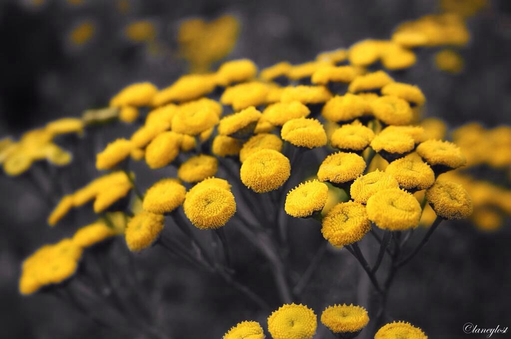Wild wild flowers flower nature natural yellow black