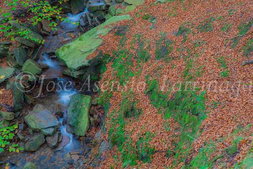 Parque natural de Gorbeia #DePaseoConLarri #Flickr      -2062