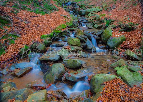 Parque natural de Gorbeia #DePaseoConLarri #Flickr      -2063