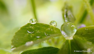 Droplets spree | by IdeaLuz Photography