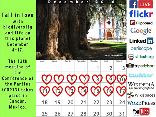 Fall in love with biodiversity #COP13 Social Web Calendar