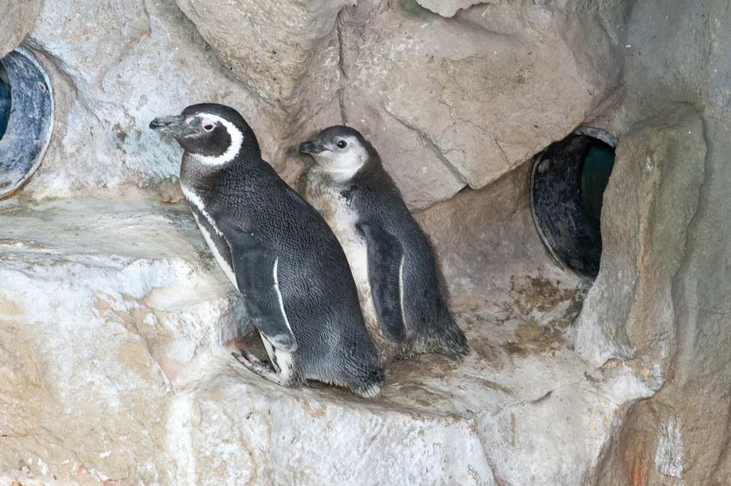 pinguino dating Mississippi stato velocità datazione
