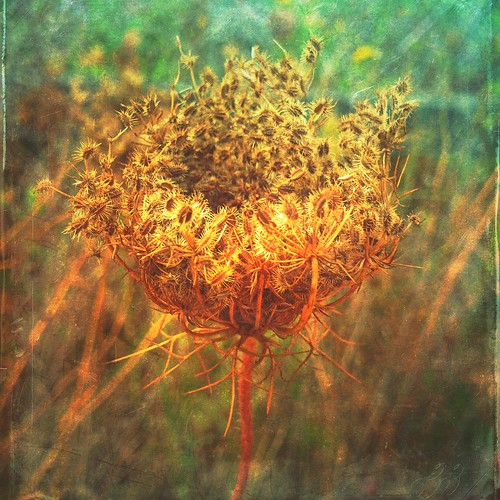 What is a weed? A plant whose virtues have never been discovered.Ralph Waldo Emerson | by Andrea Koerner