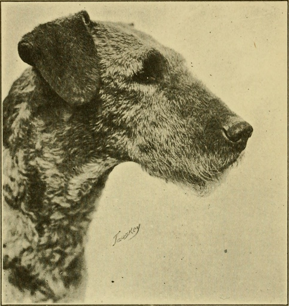 Image From Page 69 Of The Airedale Terrier Standard Simpl Flickr Book Wiring Simplified 1921