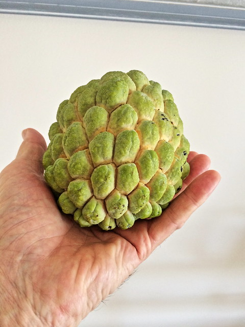 Anon or Cherimoya, ready to eat 20140724