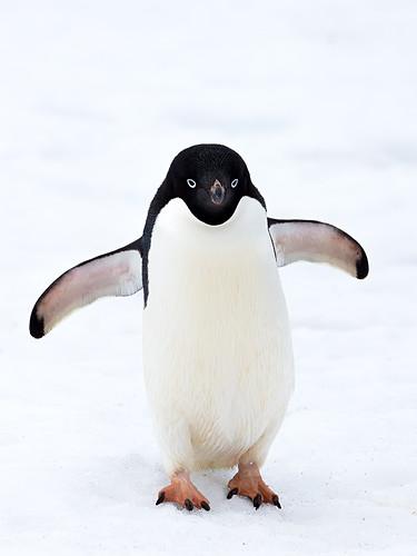 Penguin Ice Skating Cake