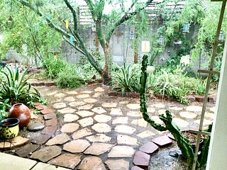 Rain in Phoenix. | by VYNNIE THE GARDENER